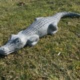 Krokodil-klein-1